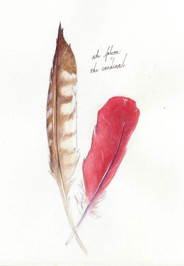 Falcon & Cardinal, watercolor